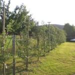 Unsere Apfel-Versuchsanlage