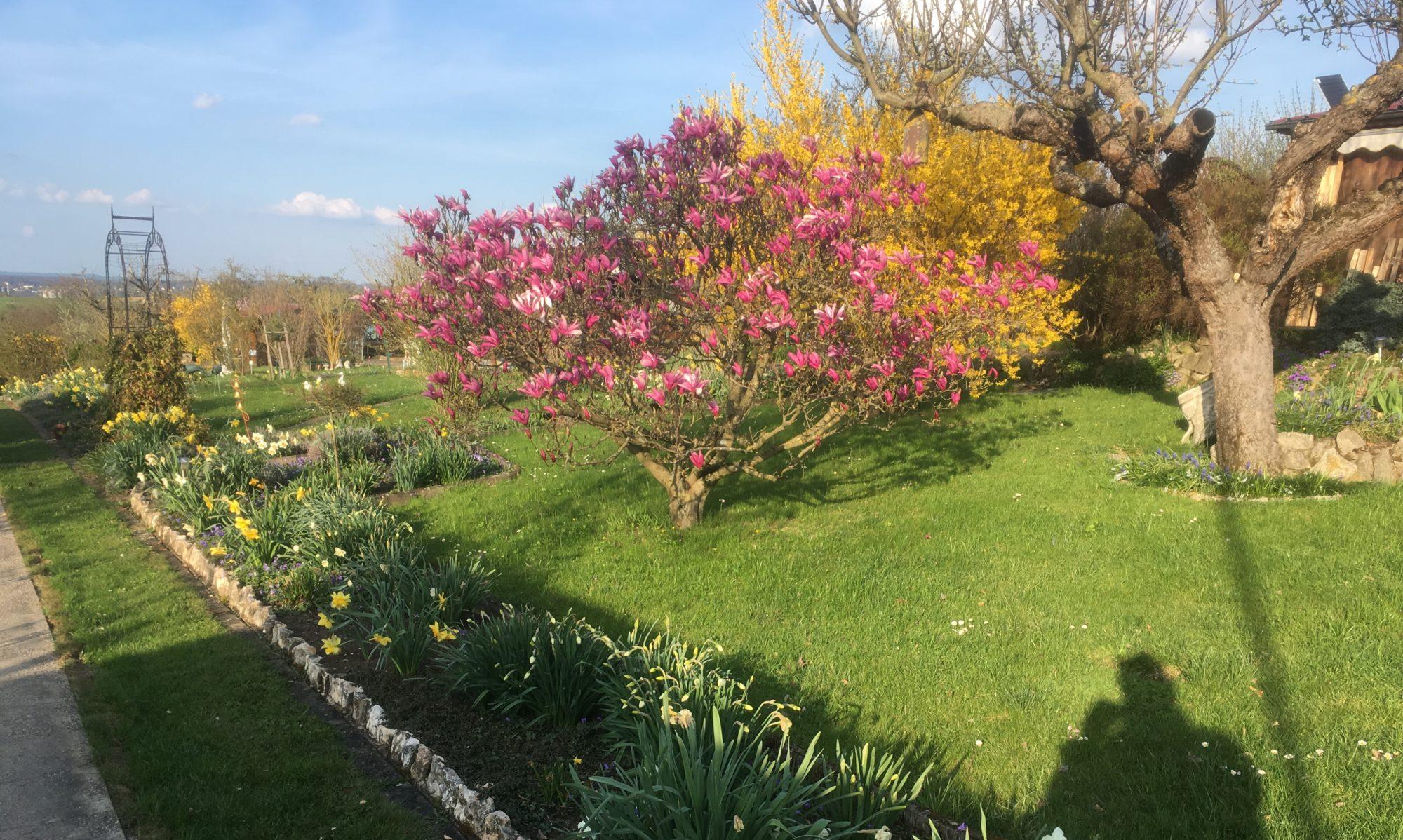 Gartenfreunde Dettingen unter Teck